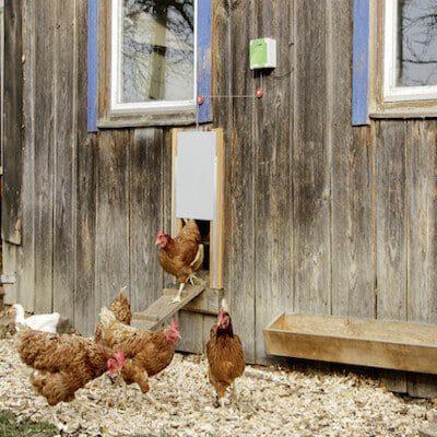 Automatische Hühnertür mit Lichtsensor