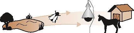Bremsenfalle-TAON-X-5-3.jpg