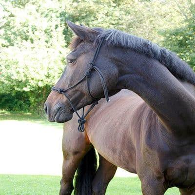 Knotenhalfter für alle Pferdetypen