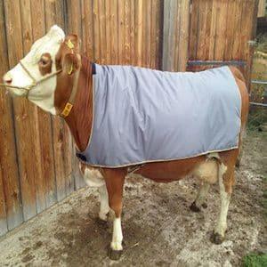 Decke für Kühe