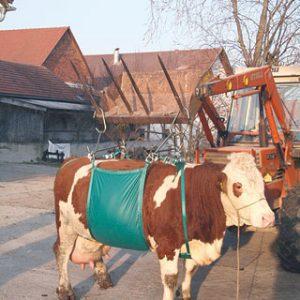 Kuhhebevorrichtung
